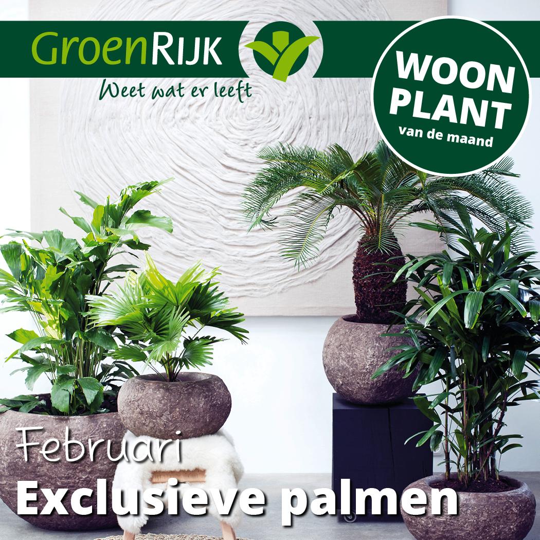 Palmen kamerplanten kopen Den Bosch