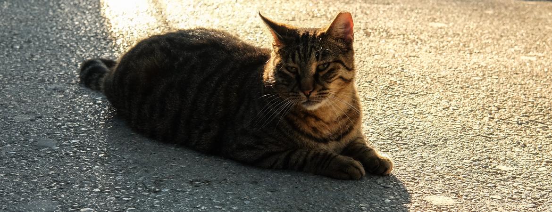 4x Zomertips voor katten