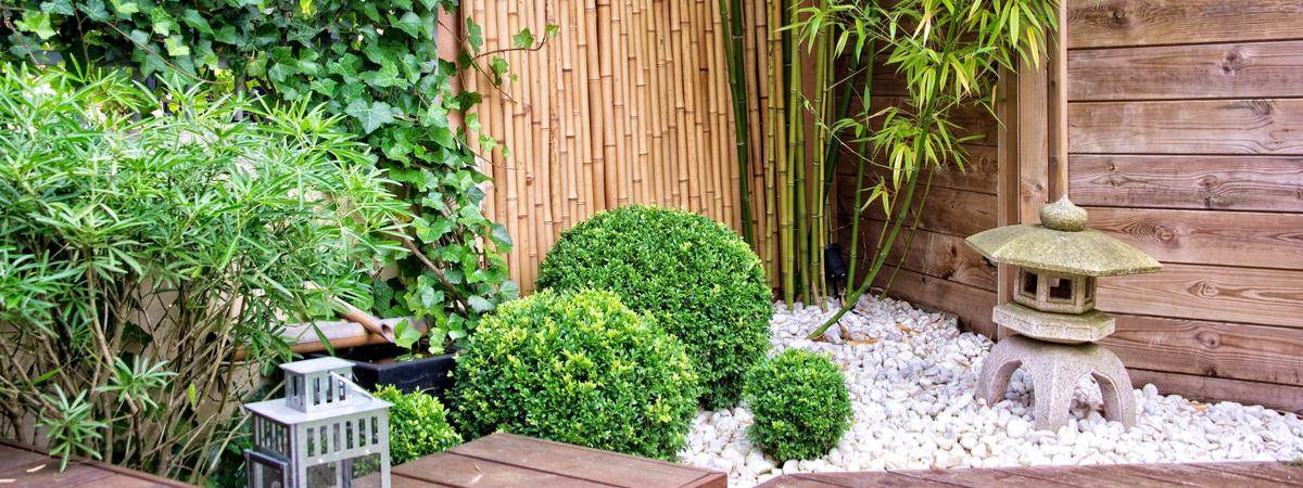 Koop uw bamboe in Den Bosch