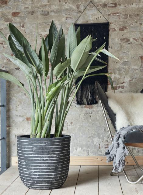 Capi: een mooi een duurzaam merk voor bloempotten en plantenbakken | GroenRijk Den Bosch