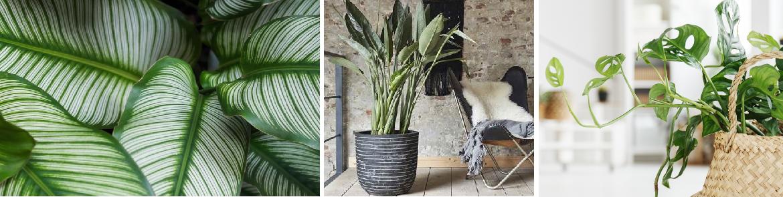 Groene kamerplanten verzorgen | GroenRijk Den Bosch