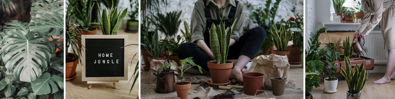 Populaire kamerplanten kopen   GroenRijk Den Bosch