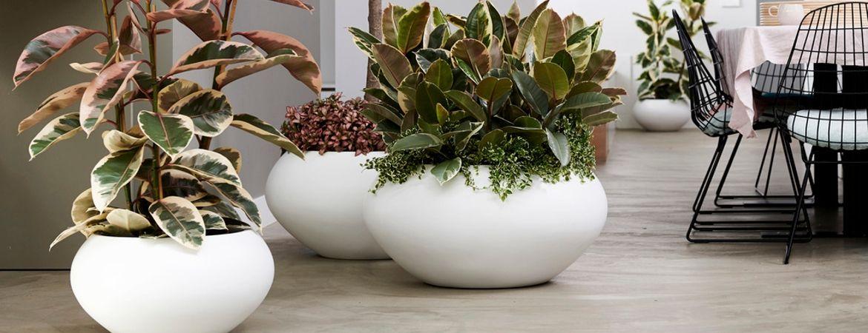 Potgrond & plantenvoeding voor uw kamerplanten