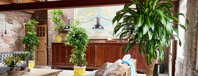 Vaak voorkomende plantenziektes bij groene kamerplanten