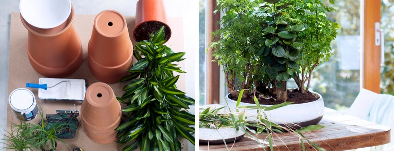 Verzorging van groene kamerplanten