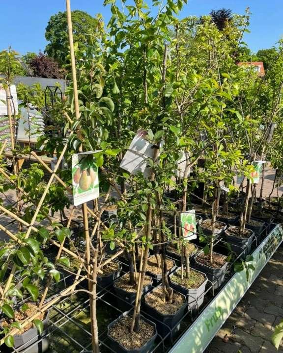 Het lekkerste uit eigen tuin! | GroenRijk Den Bosch