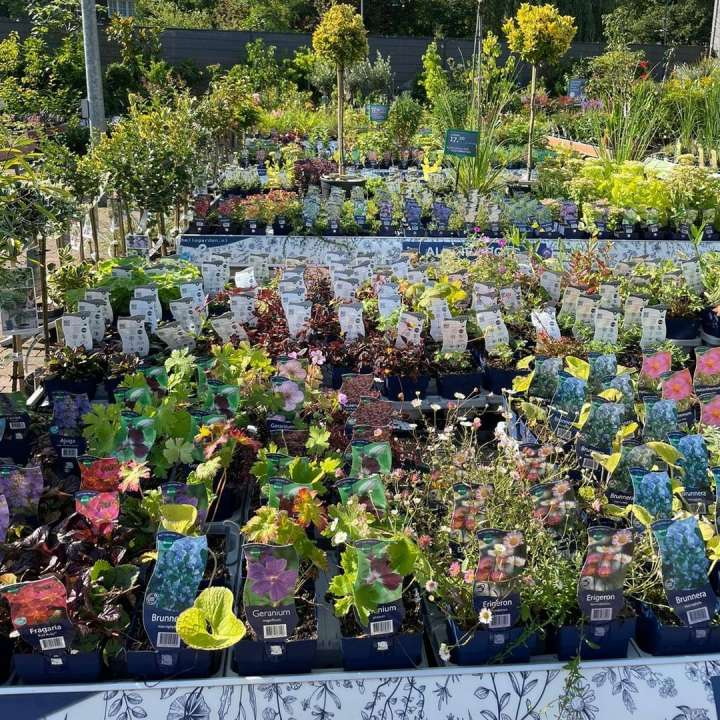 tuinplanten-kopen-den-bosch