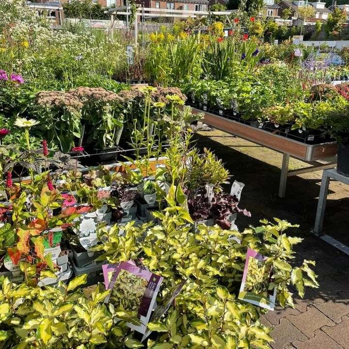 De mooiste tuinplanten vindt u bij GroenRijk Den Bosch!