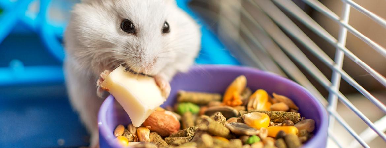 Voeding voor konijnen, cavia's en hamsters