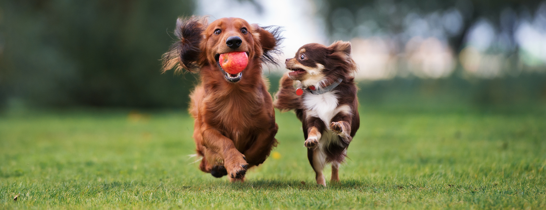 Honden verzorging artikelen in Den Bosch