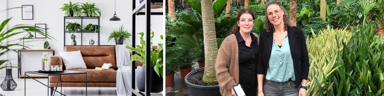 Kamerplanten trends | GroenRijk Den Bosch