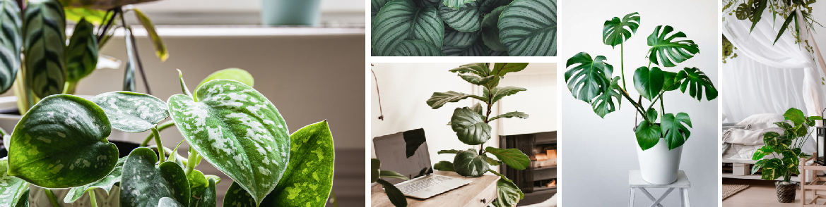 Luchtzuiverende kamerplanten kopen | GroenRijk Den Bosch