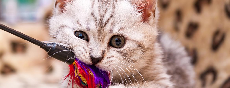 Kattenspeeltjes kopen - Den Bosch