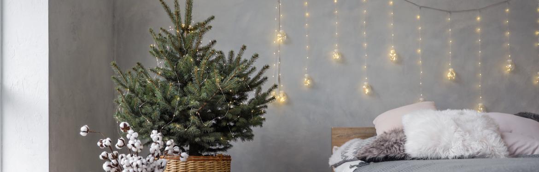 Kerstboom kopen | GroenRijk Den Bosch