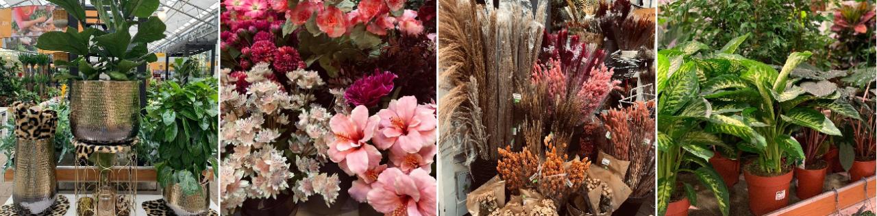 Kamerplant kopen | Moederdag | GroenRijk Den Bosch