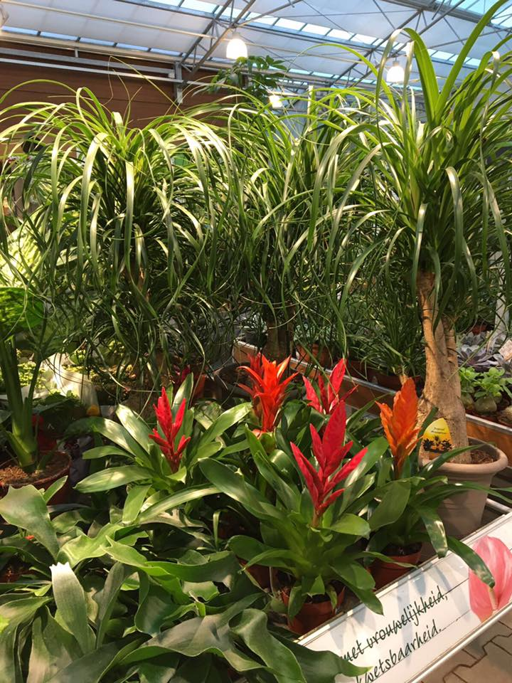 Prachtige kamerplanten kopen bij GroenRijk nabij Schijndel