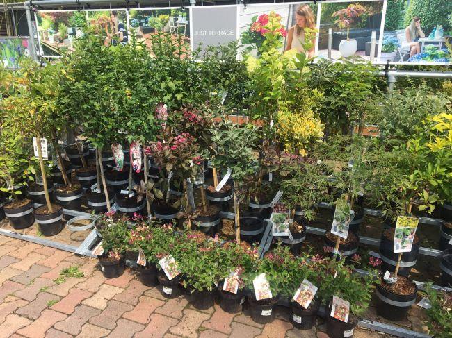 Bomen In Tuin : Bomen of coniferen kopen in den bosch? assortiment tuincentrum