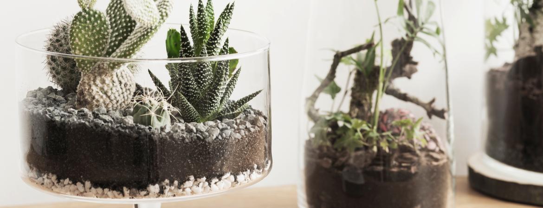 Cactus en vetplant kopen