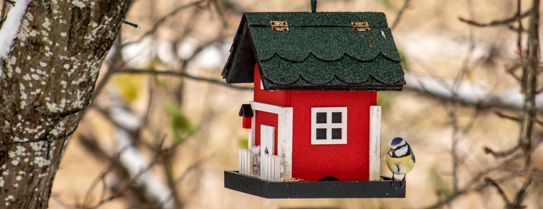 vogelhuisjes kopen om de vogels in de winter te helpen