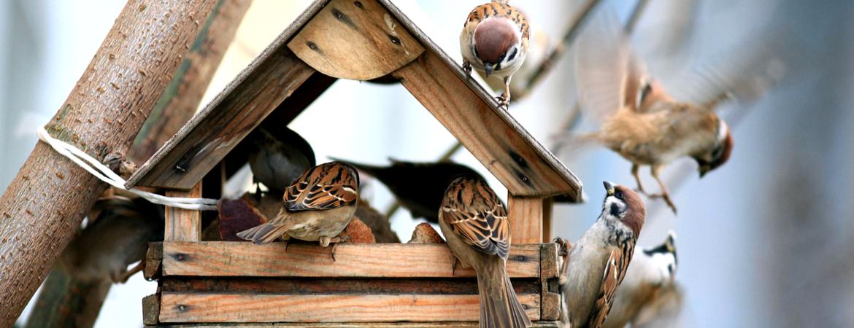 vogelhuisje kopen in den bosch